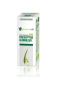 Huile Essentielle Bio Eucalyptus Globuleux à ALBERTVILLE